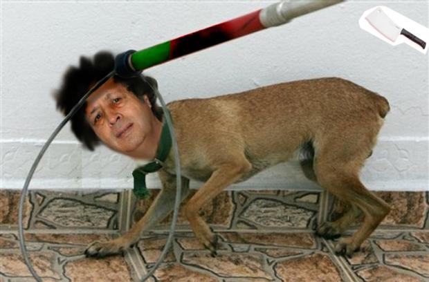 APTOPIX Puerto Rico Stray Dogs